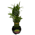 LUCKY BAMBOO SMALL ROUND